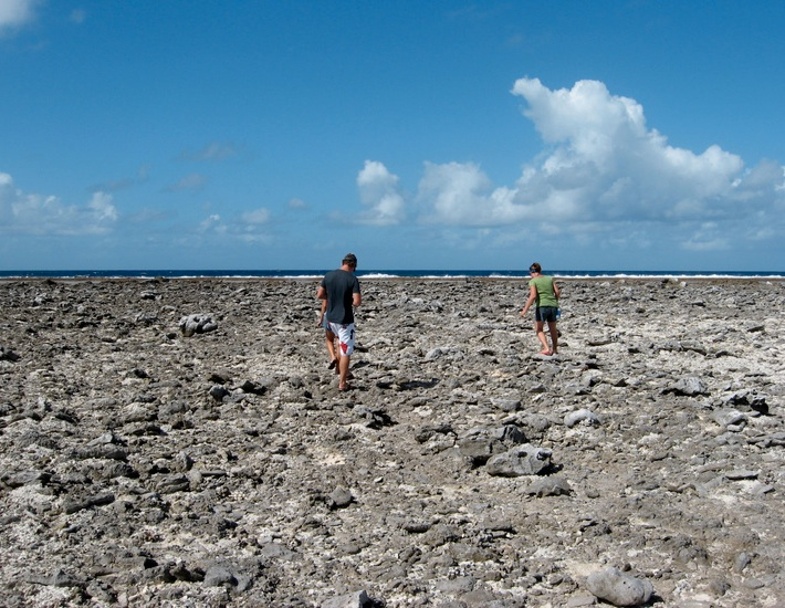 Walking the reef on Tikehau atoll
